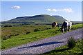 SD7880 : Cattle grazing near Far Gearstones by Ian Taylor