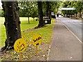 SE2281 : The Avenue into Masham by David Dixon