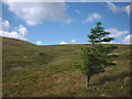 SD8696 : Lone tree above Fossdale Gill by Karl and Ali