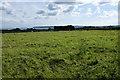 SW5032 : Cows in a field near Bowgiheere Farm by Bill Boaden