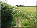 TM0986 : Wheat crop field beside Dog Lane by Evelyn Simak