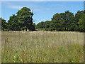 SU9933 : Field near Oaken Wood by Alan Hunt
