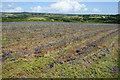 SW5231 : A harvest of harebells? by Bill Boaden