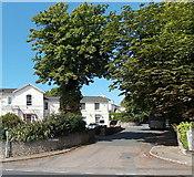 SX9364 : Barrington Road, Torquay by Jaggery