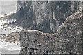 TA2073 : Gannet Conony, Bempton Cliffs, Yorkshire by Christine Matthews