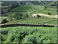 NY3103 : Bracken covered slope by Trevor Littlewood