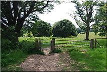 TQ5244 : Footpath in Penshurst Park by N Chadwick