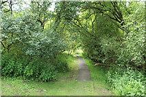 NY0265 : Path to the Old Caerlaverock Castle by Billy McCrorie
