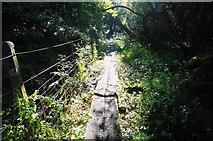 SX5856 : Walkway at Hemerdon Sidings by jeff collins