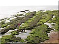 SX9778 : Rockpools belo Langstone Rock  by Stephen Craven