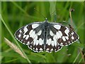 ST3484 : Marbled White butterfly, Great Traston Meadows by Robin Drayton