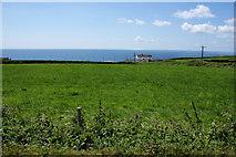 SW6522 : Field above Gunwalloe Fishing Cove by Bill Boaden
