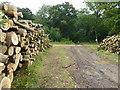 TL2479 : Piles of logs at Wennington Wood by Richard Humphrey