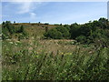 SJ9344 : Hulme Quarry National Nature Reserve by JThomas