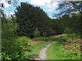 TQ0349 : Woodland track, Albury Downs by Alan Hunt