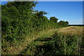 SE8342 : Bridleway leading to Common Farm by Ian S