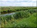 TL3290 : The River Nene (old course) near Plantation Farm, Benwick by Richard Humphrey