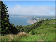 J1916 : The Kilbroney Forest overlooking Carlingford Lough by Eric Jones