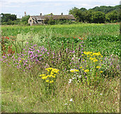 TF6304 : Wild flowers beside New Road by Evelyn Simak