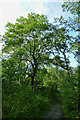SO5999 : Ash tree by David Lally