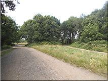 TQ2372 : Path on Wimbledon Common by David Howard