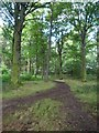 SE4206 : Little Park wood near Great Houghton by Steve  Fareham
