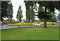 SP0795 : Roundabout flora-Kingstanding, Birmingham by Martin Richard Phelan
