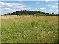 TQ0046 : Chinthurst Hill by Alan Hunt