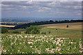 SE8567 : Woodland belt by Pauline E
