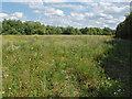 TQ0074 : Fallow grassland, Wraysbury by Alan Hunt