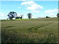 NT6926 : Field of barley below Ploughlands Farm by Oliver Dixon