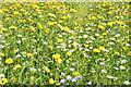 J3067 : Wildflowers near the Drum Bridge, Dunmurry (July 2014) by Albert Bridge