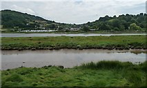 SY2591 : Axe estuary at Axmouth, on a falling tide by Christine Johnstone