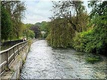 SU4828 : River Itchen, Wharf Hill by David Dixon