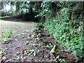 SW8765 : Stream, St Mawgan by Ian Knight