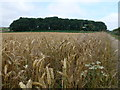 TF8038 : Gravelpit Plantation near Satanhoe, Norfolk by Richard Humphrey