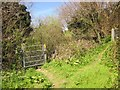 SX4266 : Path junction above the Tamar by Derek Harper