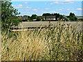 SU1578 : Beranburh field, Wroughton, Swindon by Brian Robert Marshall