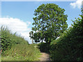 SU9445 : Chalk Lane, Shackleford by Alan Hunt