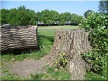 TQ2284 : Former tree in Roundwood Park by Marathon