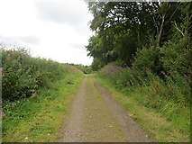 NS6351 : Road, Langlands Moss by Richard Webb