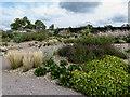 TQ7899 : Hyde Hall, RHS Garden, Essex by Christine Matthews