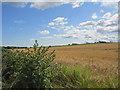 NJ1569 : Harvest at Hopeman by Jennifer Jones
