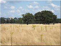 TQ1974 : Richmond Park by Malc McDonald