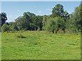SU9252 : The Glen, Ash Ranges by Alan Hunt
