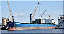 "J3576 : The ""Selandia"", Belfast (August 2014) by Albert Bridge"