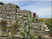 SS8872 : Thistles and ruins by Debbie J