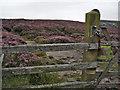 SK0490 : Burnt Hill by Stephen Burton