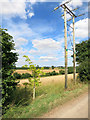 SP4422 : Cables and New Oak by Des Blenkinsopp