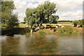 SP7941 : Cattle by the River Great Ouse by Richard Croft